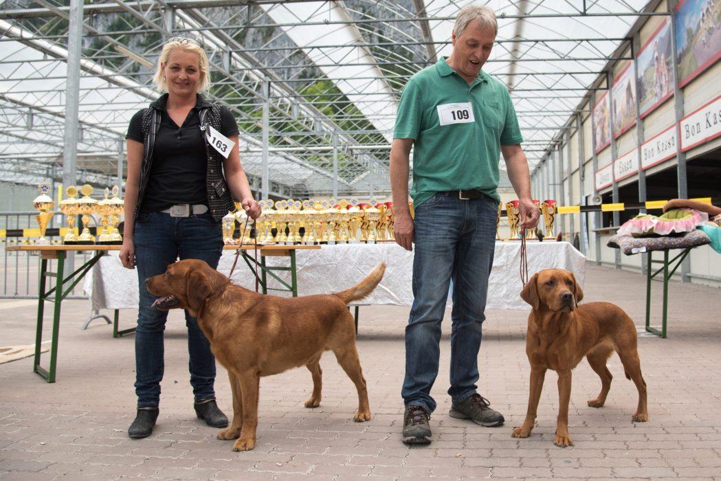 Hundeschau Ebbs Labradorzucht Foxred